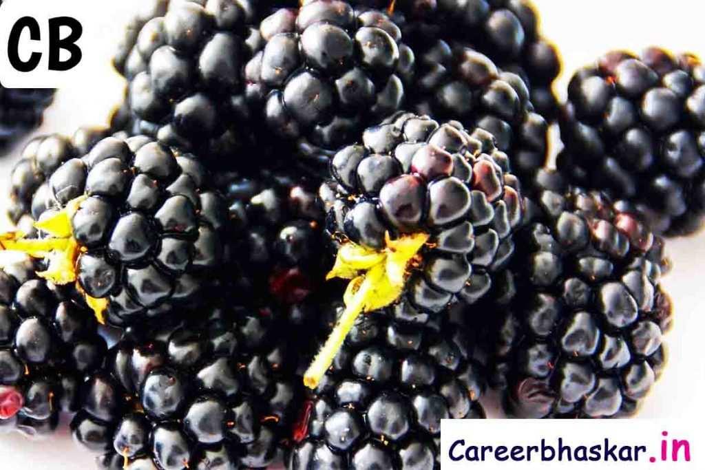 benefits of berry